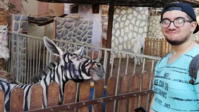 Zebra Görünümlü Eşek Paylaşımı Mısırda Viral Oldu Bbc News Türkçe