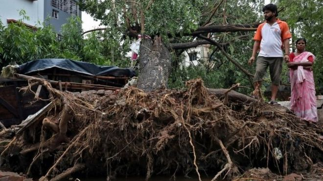 Personas miran un árbol arrancado de la tierra en Calcuta Foto: 21 de mayo de 2020.