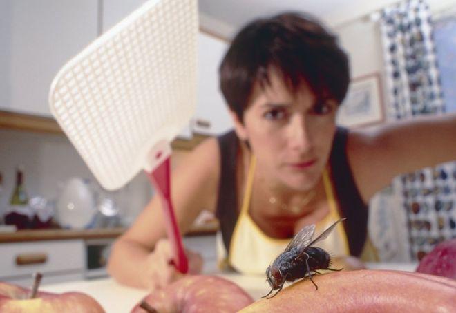 ¿Por qué es tan difícil atrapar a una mosca?