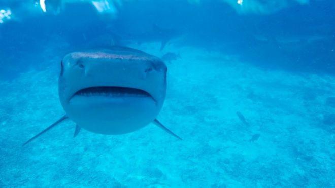 [Image: _100388492_shark.jpg]