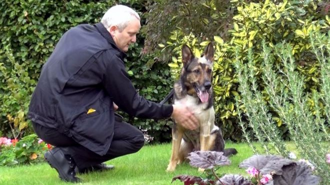 Police dog Finn: The attack that almost killed a \'hero\' - BBC News