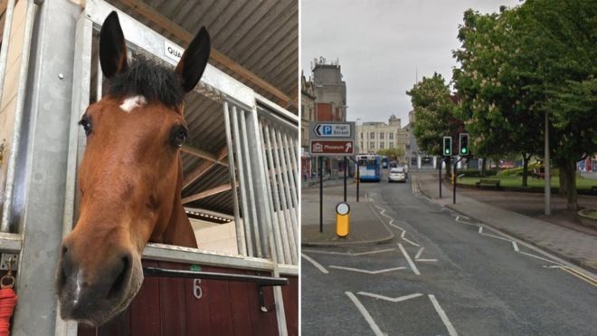 Man charged with punching horse after World Cup defeat