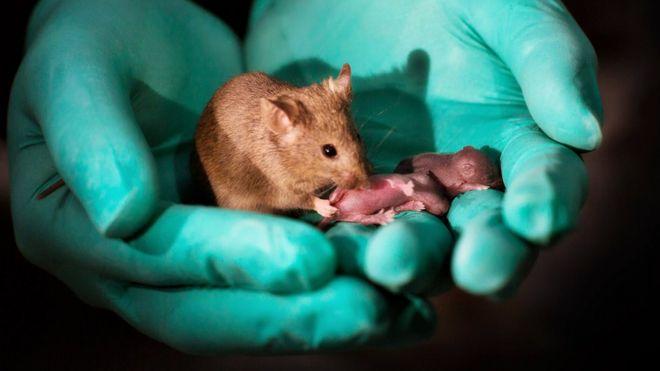 Ratón con crías