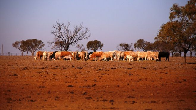 australia s turnbull now we are the land of droughts bbc news