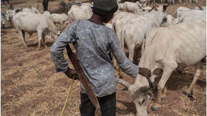 Nigeria: Dokar hana kiwo a Benue ta fusata Fulani - BBC News Hausa