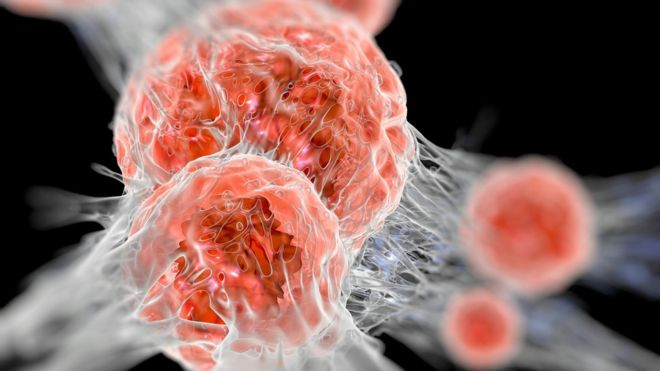 nobel prize for medicine goes to cancer therapy bbc news