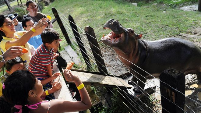 Visitors are seen looking at a hippo called Vanesa in 2009