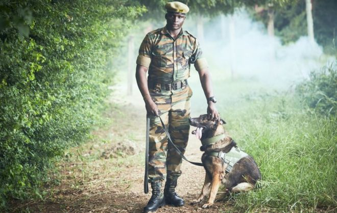 Kenyan Wildlife Service (KWS) ranger Edwin Koech, with his dog Ram, during a training session for sniffer dogs and their handlers at the Kenya Wildlife Service (Marine Park) offices.