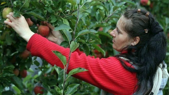 elma toplayan kadın