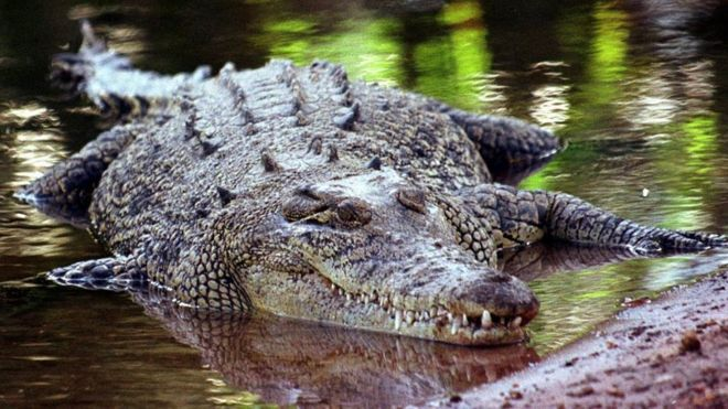 _86255453_croc2 - To sleep, perchance to dream... - Photos Unlimited