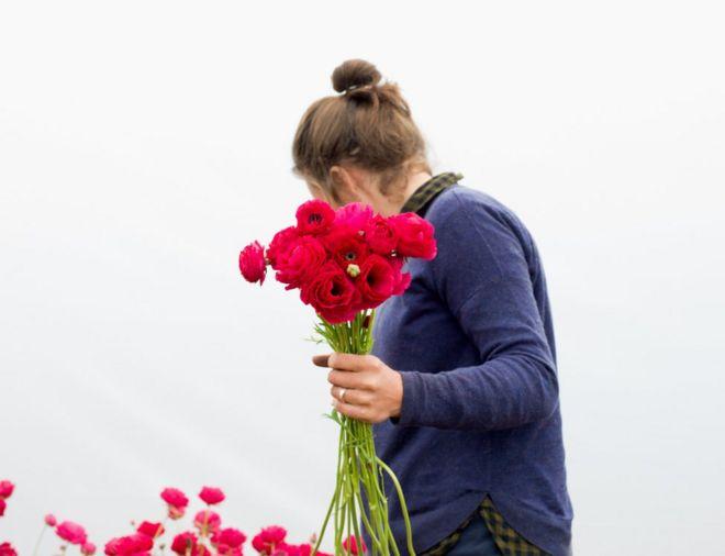 تقطف زهور الحوذان عند الفجر في شمالي يوركيشير