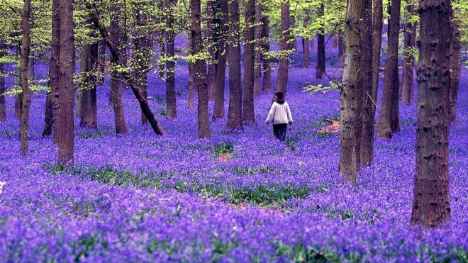 5 Sensasi Berbeda Musim Semi di Inggris