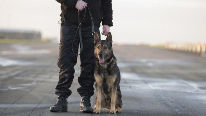 Police dog and officer stabbed in Stevenage armed robber