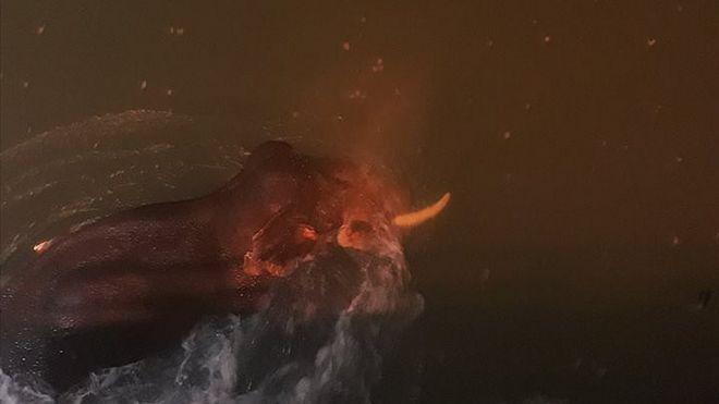 Elephant drowning