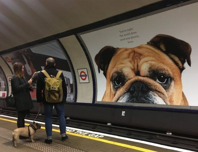 A dog sees a large poster of a dog