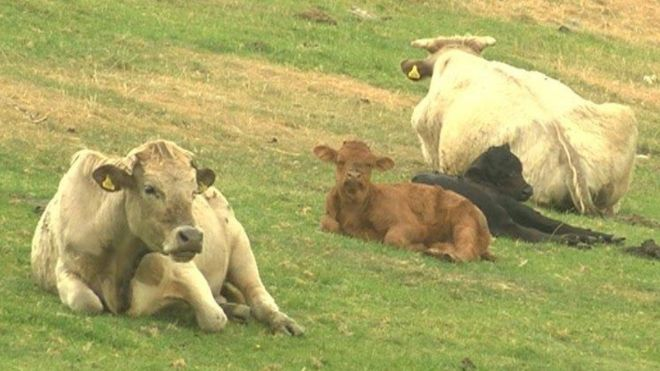 Welsh single farm payment scheme