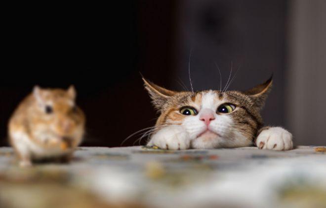 น้องแมว