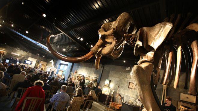 Скелет мамонта на аукционе