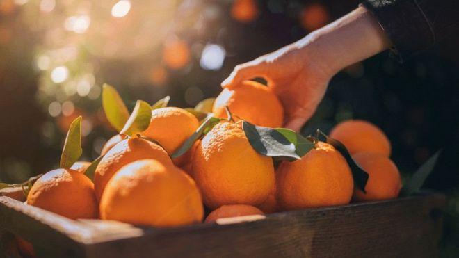 البرتقال ليس الفاكهة الوحيدة التي تحتوي على جزيئات مقاومة للسرطان، بحسب الدراسة