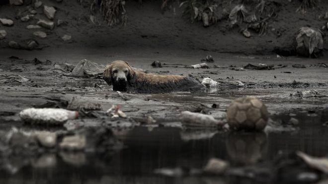 Cachorro em rio poluído brasileiro