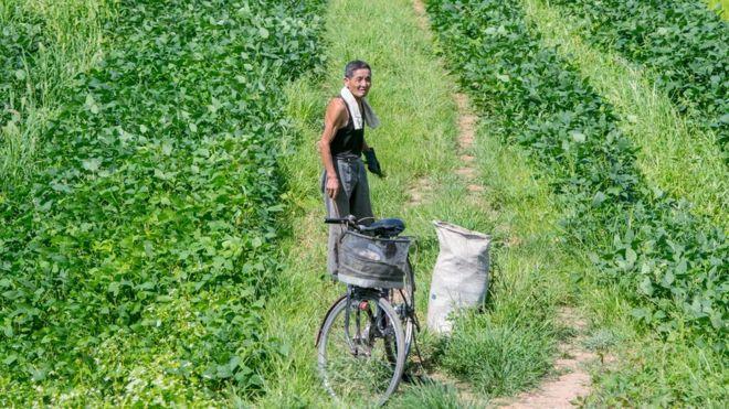 Kuzey Koreli bir çiftçi