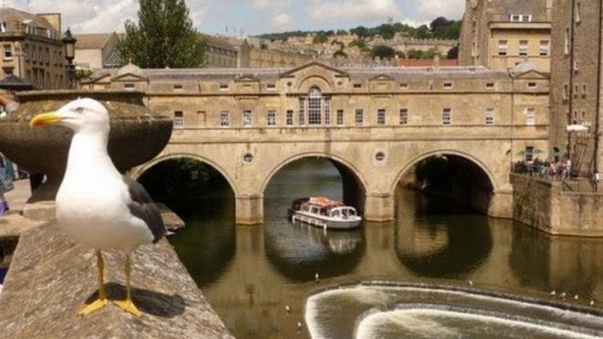 Gulls research project plan by Bath council and university ...