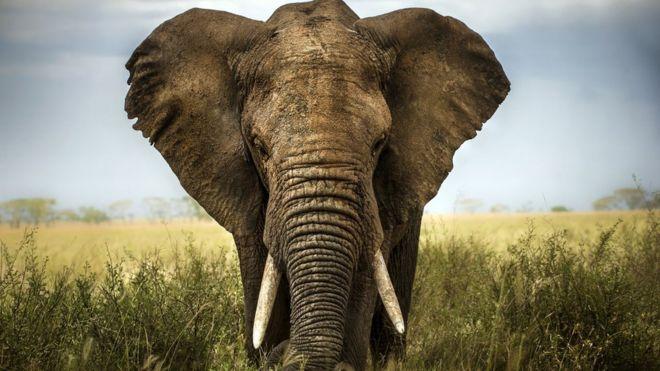 Resultado de imagen para elefantes
