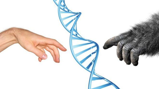 Рука человека, рука обезьяны и спираль ДНК.