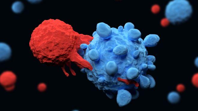 Linfócito atacando uma célula de câncer