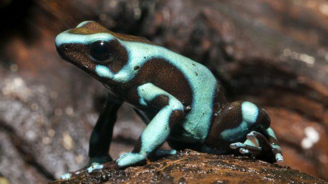 Frog evolution linked to dinosaur asteroid strike - BBC News