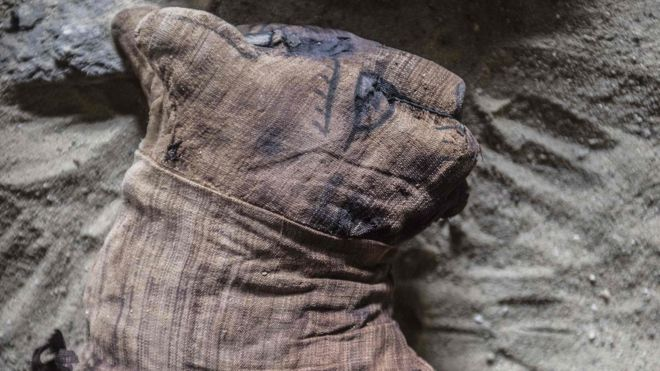 Mumi kucing yang ditemukan di dekat kompleks piramid Raja Userkaf di Saqqara Necropolis pada 10 November 2018