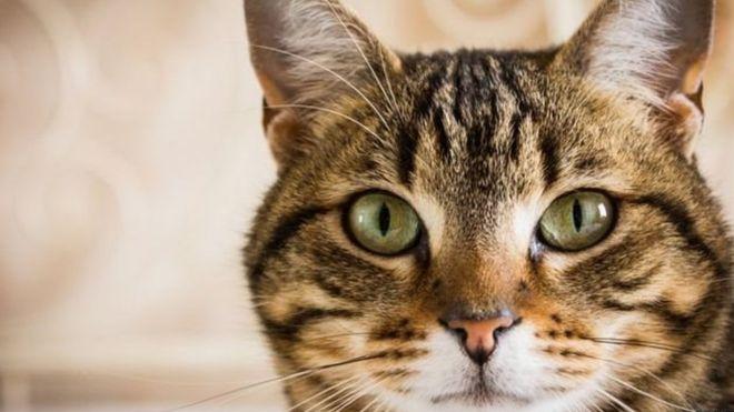 گربههای خط و خالدار