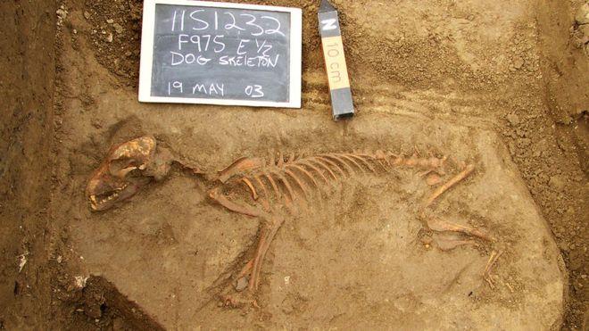 Sítio de escavação no Illinois, EUA