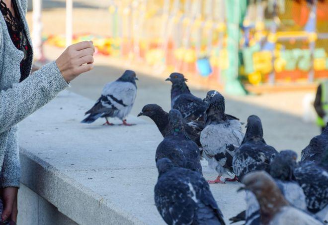 Девушка кормит голубей