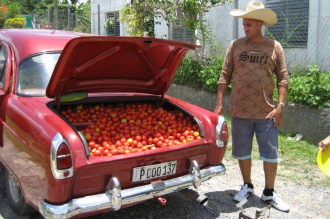 طماطم للبيع في كوبا