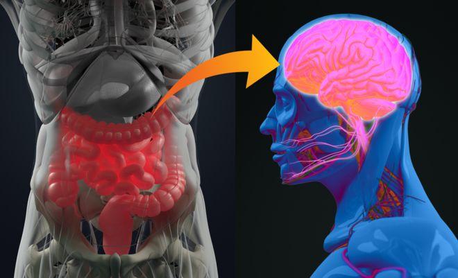 Ilustração mostra conexão entre o intestino e o cérebro