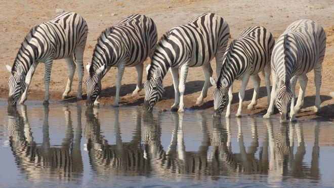 Los Asombrosos Animales Que Pueden Vivir Sin Agua Durante Años Bbc