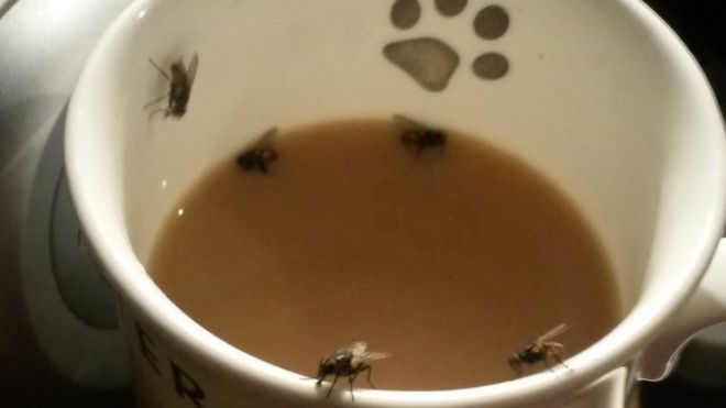 Environment Agency: Derby's plague of flies 'resolved' - BBC