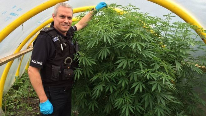 A police officer with a cannabis plant