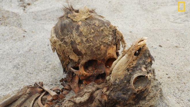 O esqueleto de uma criança junto com o esqueleto de uma lhama na areia