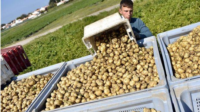 افزایش قابل توجه قیمت بعضی سبزیجات در بازار ایران