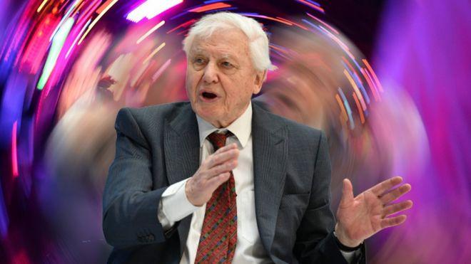 David Attenborough WLTM trance producer - BBC News
