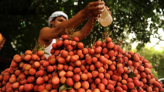 lychee seller in allahabad