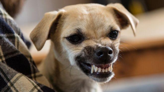 Resultado de imagem para Estudo afirma: Estresse de humanos contagia os cães