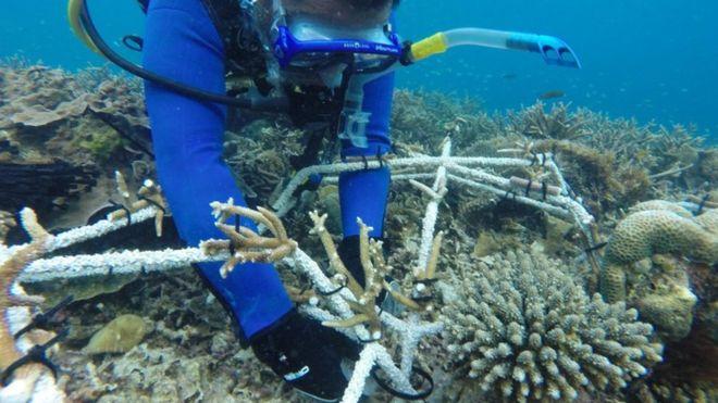 珊瑚礁的大灾难:人类能做些什么