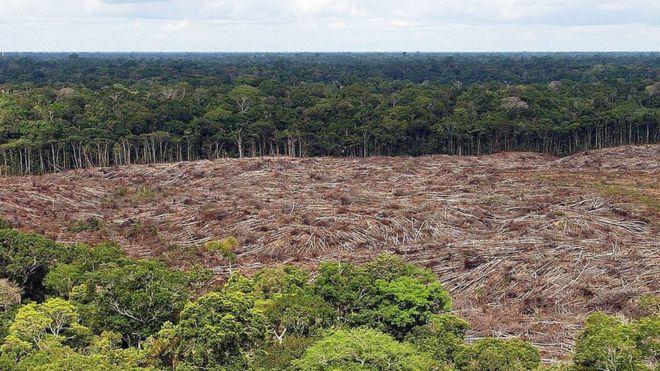 Foto de 2013 mostra área onde árvores foram derrubadas na Amazônia