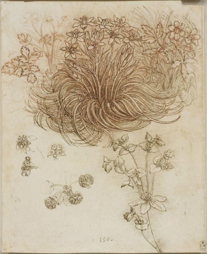 A drawing of a star-of-Bethlehem and other plants by Leonardo da Vinci
