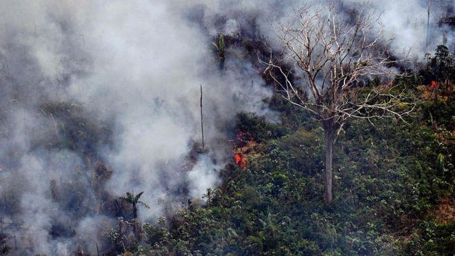 Imagem mostra foto em árvores na Amazônia