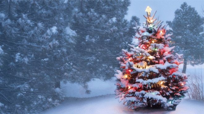 decorated christmas tree in forest - Christmas Tree