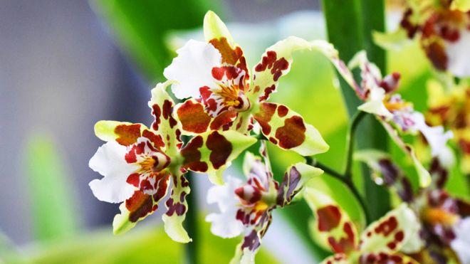 Orquídeas en el festival de Kew Gardens